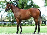 Our favourite filly from Magic Millions joins Team Hawkes
