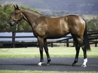 Frankel filly tops Cressfield Stud's draft
