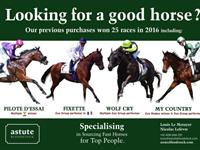 Looking for a good horse ?