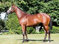 Astute yearling purchases @ NZB