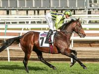 Ventura Storm, second to Winx in Turnbull Stakes Gr1