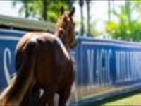 Good shopping at the Magic Millions mare sales