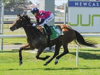 Buckin' Beauty impress at Newcastle