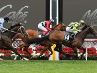 Ventura Storm salutes in Moonee Valley Cup
